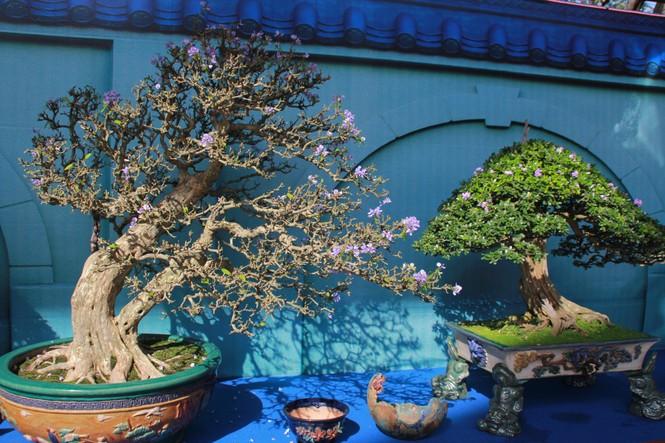 Chiêm ngưỡng các tác phẩm bonsai và đá cảnh nghệ thuật quốc tế hội tụ ở TPHCM - ảnh 6