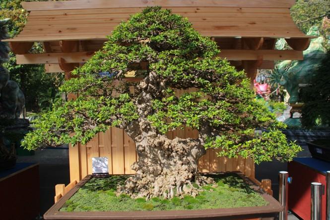 Chiêm ngưỡng các tác phẩm bonsai và đá cảnh nghệ thuật quốc tế hội tụ ở TPHCM - ảnh 1