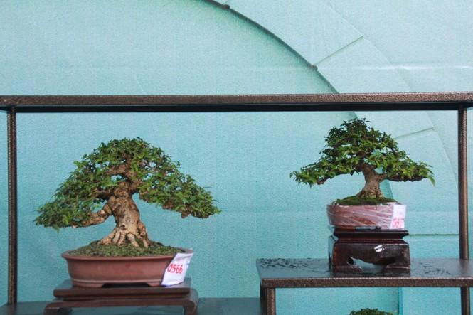 Chiêm ngưỡng các tác phẩm bonsai và đá cảnh nghệ thuật quốc tế hội tụ ở TPHCM - ảnh 20