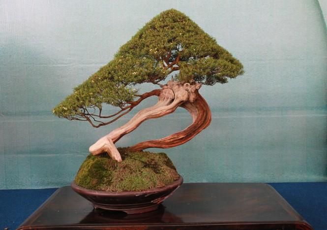 Chiêm ngưỡng các tác phẩm bonsai và đá cảnh nghệ thuật quốc tế hội tụ ở TPHCM - ảnh 19