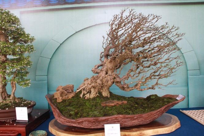 Chiêm ngưỡng các tác phẩm bonsai và đá cảnh nghệ thuật quốc tế hội tụ ở TPHCM - ảnh 16