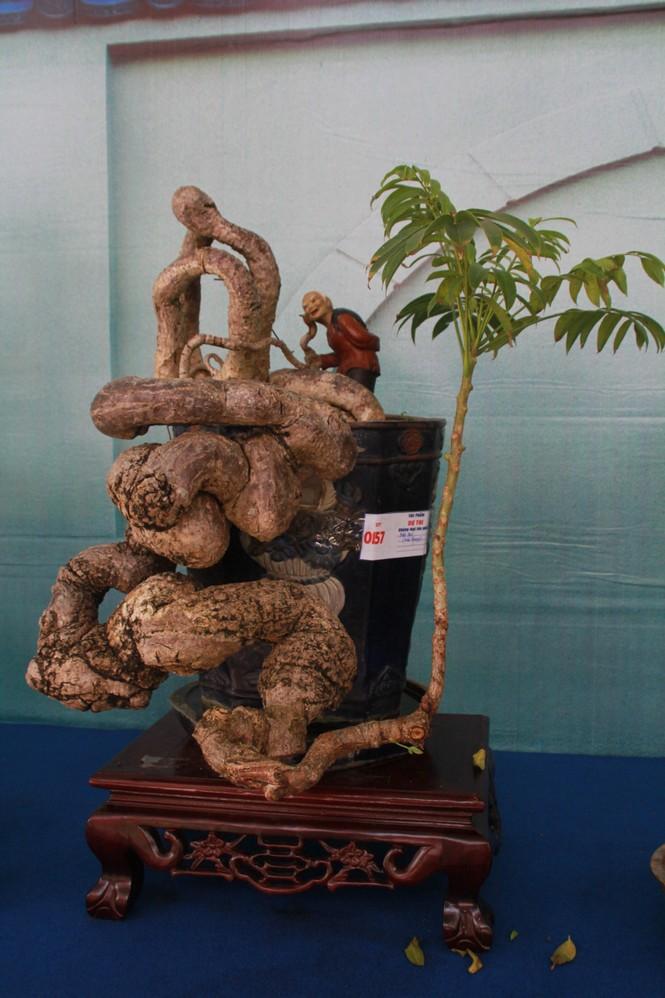 Chiêm ngưỡng các tác phẩm bonsai và đá cảnh nghệ thuật quốc tế hội tụ ở TPHCM - ảnh 10