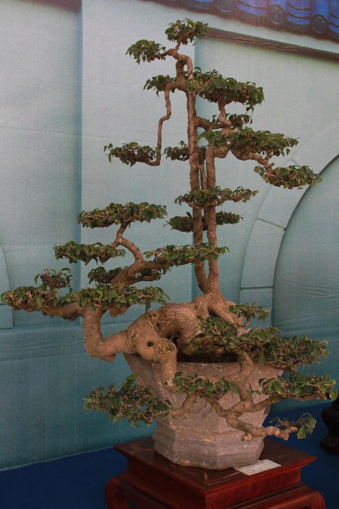 Chiêm ngưỡng các tác phẩm bonsai và đá cảnh nghệ thuật quốc tế hội tụ ở TPHCM - ảnh 12
