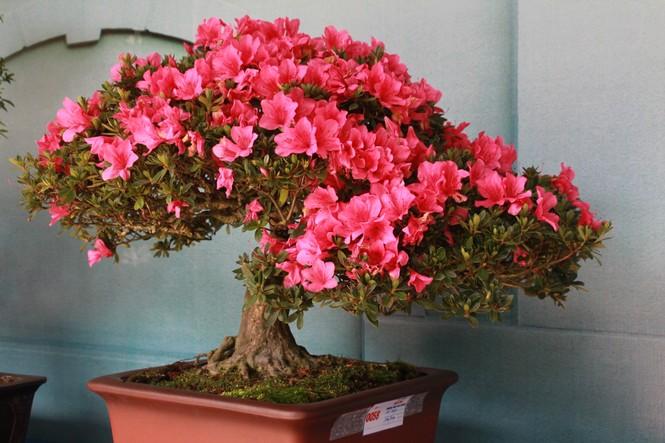 Chiêm ngưỡng các tác phẩm bonsai và đá cảnh nghệ thuật quốc tế hội tụ ở TPHCM - ảnh 7