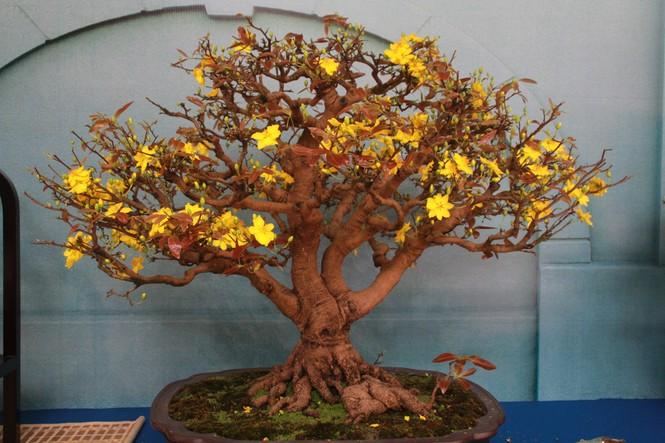 Chiêm ngưỡng các tác phẩm bonsai và đá cảnh nghệ thuật quốc tế hội tụ ở TPHCM - ảnh 8