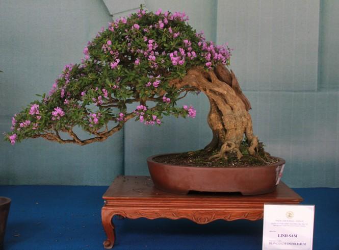 Chiêm ngưỡng các tác phẩm bonsai và đá cảnh nghệ thuật quốc tế hội tụ ở TPHCM - ảnh 11