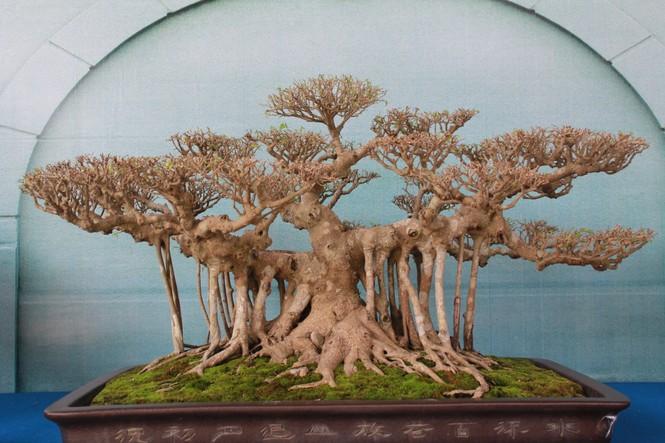 Chiêm ngưỡng các tác phẩm bonsai và đá cảnh nghệ thuật quốc tế hội tụ ở TPHCM - ảnh 13
