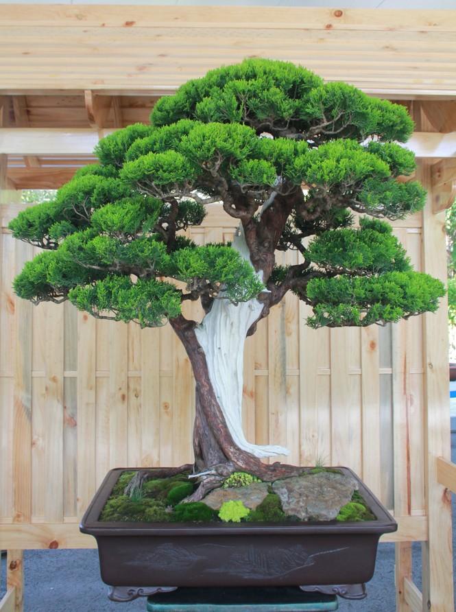 Chiêm ngưỡng các tác phẩm bonsai và đá cảnh nghệ thuật quốc tế hội tụ ở TPHCM - ảnh 9