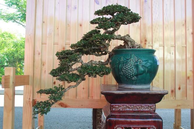 Chiêm ngưỡng các tác phẩm bonsai và đá cảnh nghệ thuật quốc tế hội tụ ở TPHCM - ảnh 14