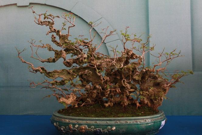 Chiêm ngưỡng các tác phẩm bonsai và đá cảnh nghệ thuật quốc tế hội tụ ở TPHCM - ảnh 15