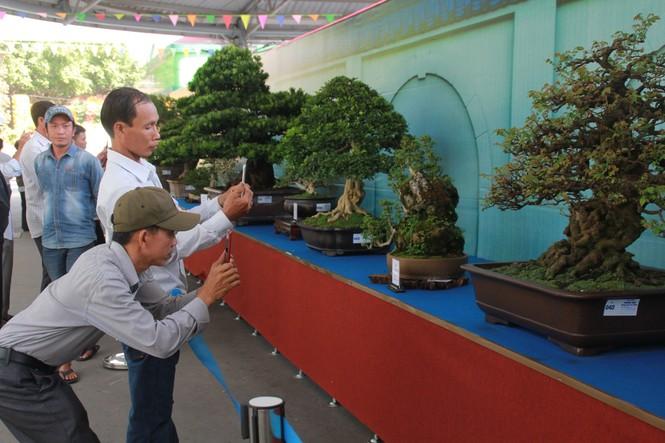 Chiêm ngưỡng các tác phẩm bonsai và đá cảnh nghệ thuật quốc tế hội tụ ở TPHCM - ảnh 21