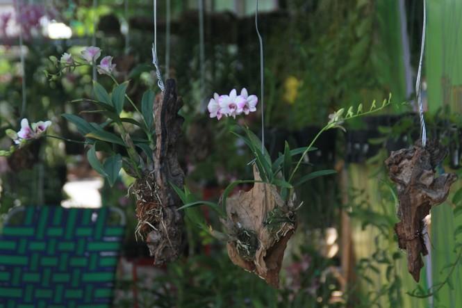 Ngắm nhiều loại cây, hoa độc đáo tại Tuần lễ sinh vật cảnh TPHCM 2019 - ảnh 3