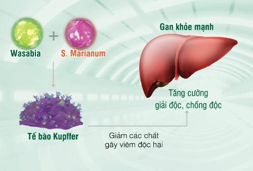Người Việt mắc bệnh gan chỉ vì thích bia rượu - ảnh 1