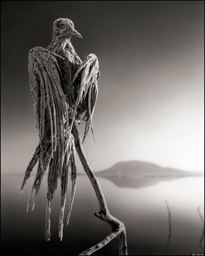 Những xác động vật hóa đá trong hồ tử thần - ảnh 2