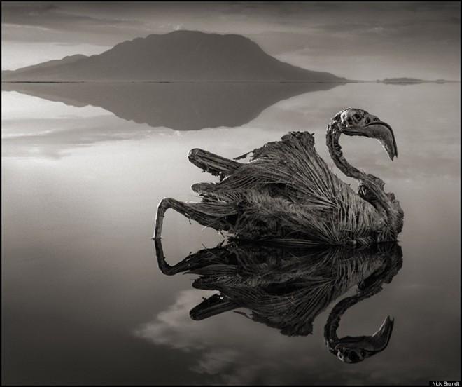 Những xác động vật hóa đá trong hồ tử thần - ảnh 3