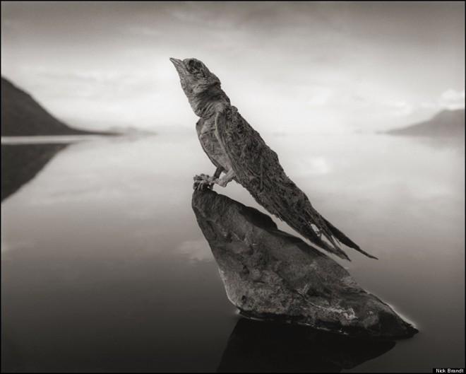 Những xác động vật hóa đá trong hồ tử thần - ảnh 6