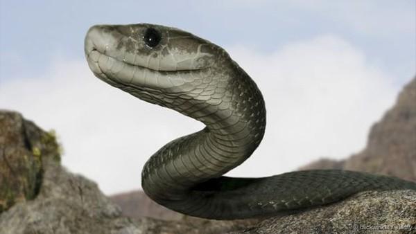 Thực hư về loài rắn khổng lồ ăn thịt người ở Indonesia - ảnh 1