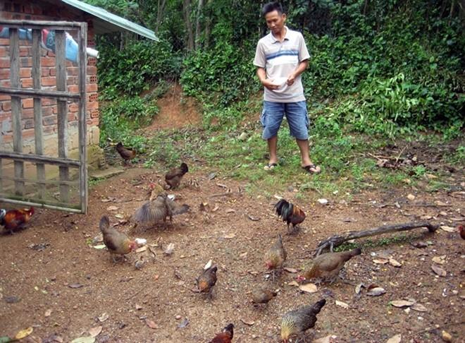 Làm giàu từ 7 quả trứng gà rừng - ảnh 1