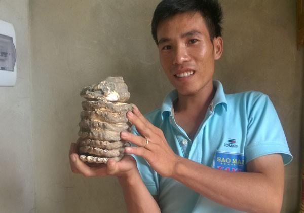 Nhặt được hàm răng hóa thạch của voi ma mút? - ảnh 2