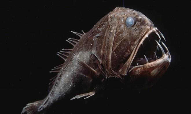 Lạnh người với những 'quái vật' dưới lòng đại dương - ảnh 11