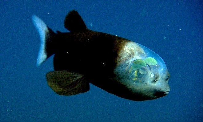 Lạnh người với những 'quái vật' dưới lòng đại dương - ảnh 5