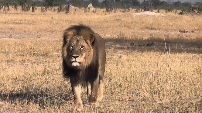 Dân mạng truy lùng nha sĩ chặt đầu 'vua sư tử' - ảnh 2