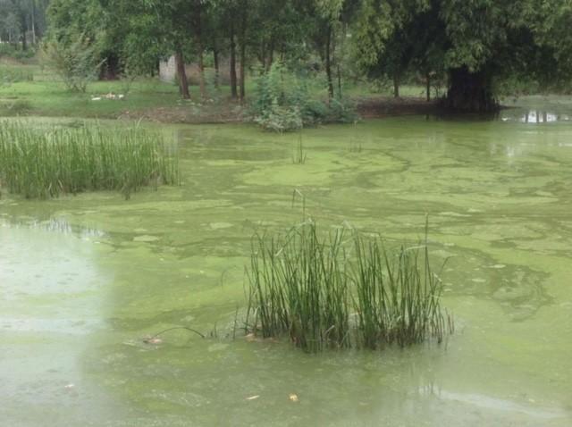 Lo thắt lòng cảnh cá chết hàng loạt trên sông Bùng - ảnh 6