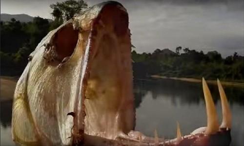 10 sinh vật sở hữu bộ hàm đáng sợ nhất hành tinh - ảnh 9