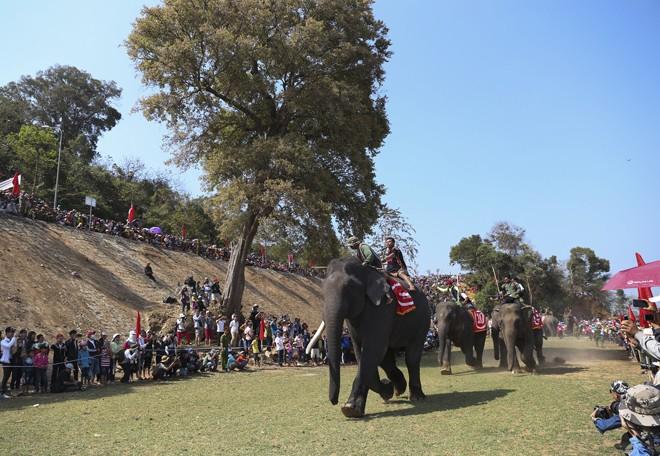 Hàng chục chú voi 'đeo áo số'... thi chạy, vượt hồ - ảnh 11