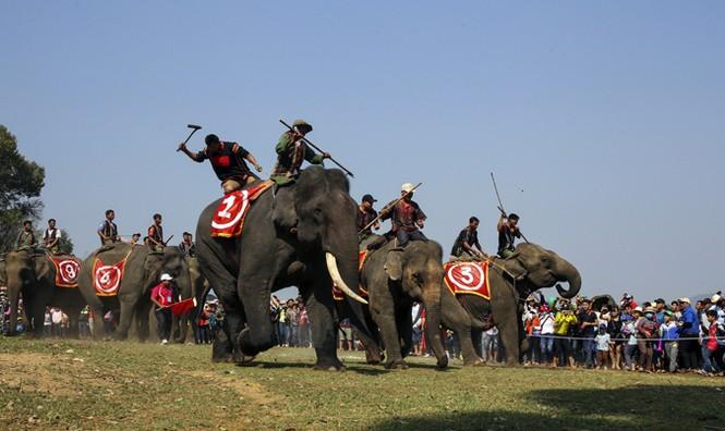 Hàng chục chú voi 'đeo áo số'... thi chạy, vượt hồ - ảnh 12