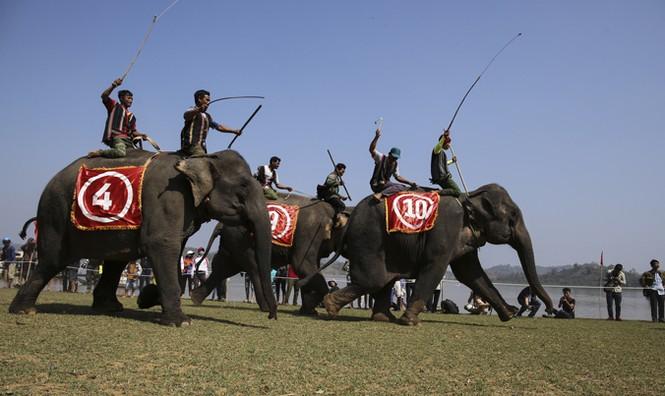 Hàng chục chú voi 'đeo áo số'... thi chạy, vượt hồ - ảnh 14