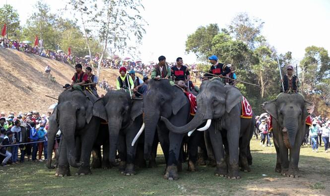 Hàng chục chú voi 'đeo áo số'... thi chạy, vượt hồ - ảnh 16
