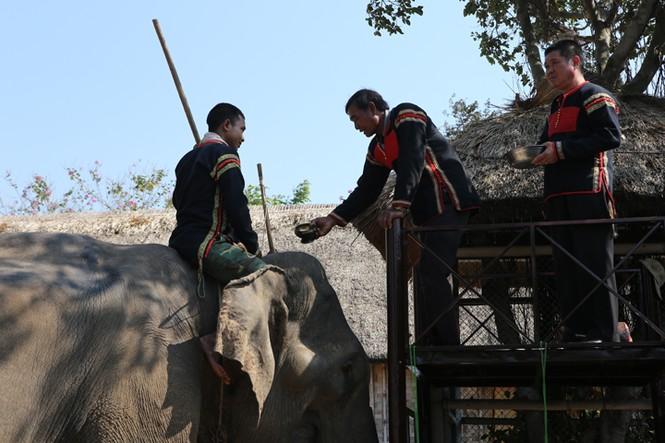 Hàng chục chú voi 'đeo áo số'... thi chạy, vượt hồ - ảnh 1