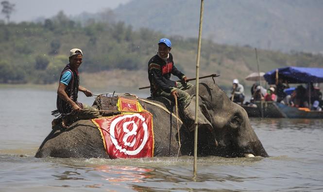Hàng chục chú voi 'đeo áo số'... thi chạy, vượt hồ - ảnh 20