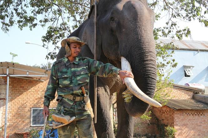 Hàng chục chú voi 'đeo áo số'... thi chạy, vượt hồ - ảnh 3