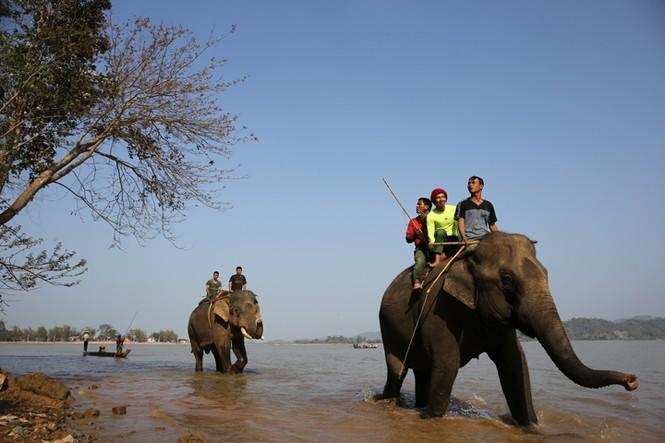 Hàng chục chú voi 'đeo áo số'... thi chạy, vượt hồ - ảnh 4