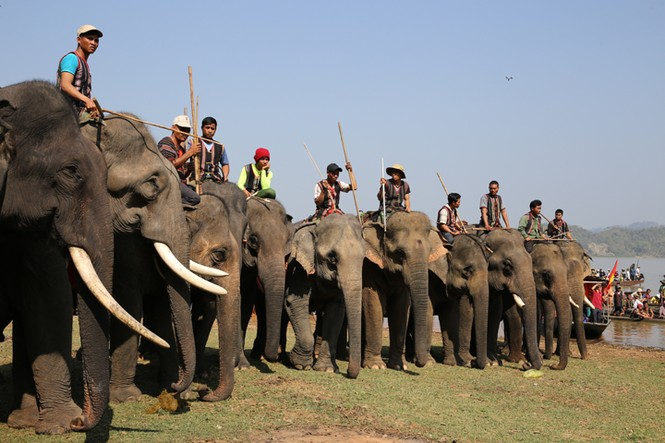 Hàng chục chú voi 'đeo áo số'... thi chạy, vượt hồ - ảnh 5