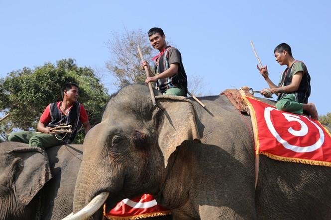 Hàng chục chú voi 'đeo áo số'... thi chạy, vượt hồ - ảnh 6