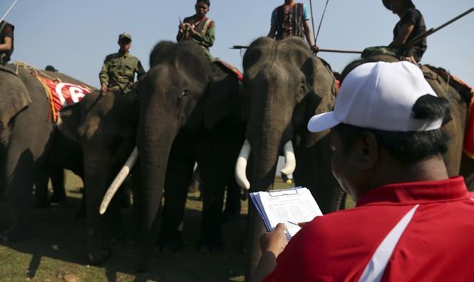 Hàng chục chú voi 'đeo áo số'... thi chạy, vượt hồ - ảnh 9