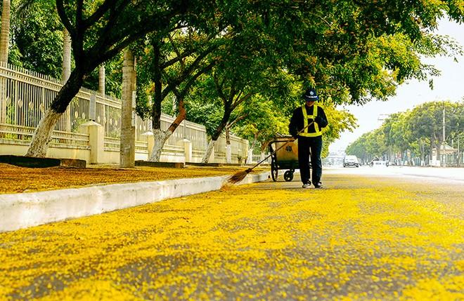 Những con đường hoa sưa vàng rực ở Quảng Nam - ảnh 5
