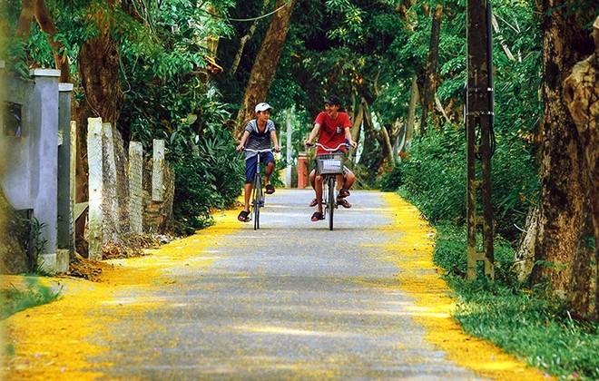 Những con đường hoa sưa vàng rực ở Quảng Nam - ảnh 6