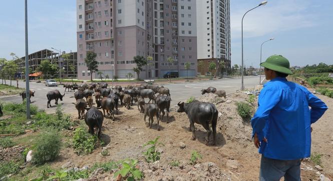 Cuộc chuyển mình 10 năm của kinh tế Hà Nội - ảnh 1