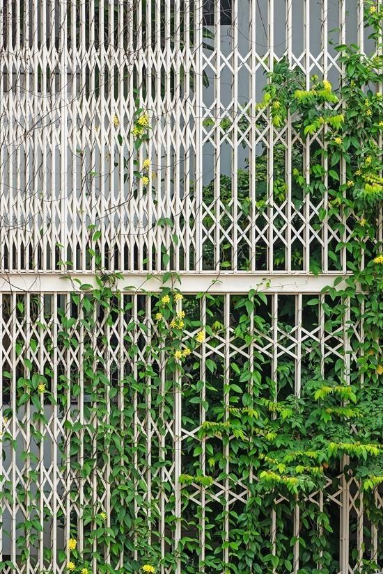 Nhà 5 tầng Hà Nội 'giấu' giàn cây xanh mát sau lớp mành sắt - ảnh 3