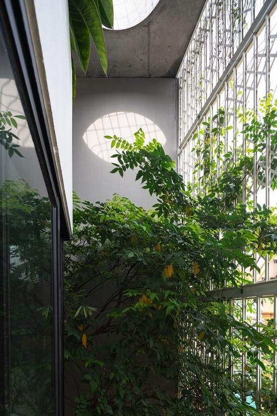 Nhà 5 tầng Hà Nội 'giấu' giàn cây xanh mát sau lớp mành sắt - ảnh 4