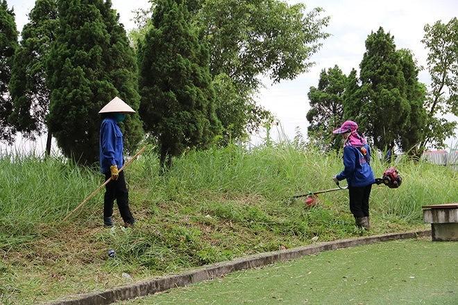 Phát quang cây cối xung quanh chung cư Hà Nội liên tục bị rắn độc 'bủa vây'  - ảnh 1