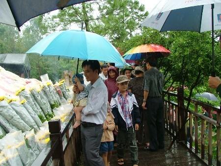 Hàng vạn người đội mưa viếng mộ Đại tướng dịp Tết độc lập - ảnh 8