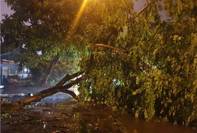 Hình ảnh bão số 3 đổ bộ, Móng Cái cây đổ ngổn ngang - ảnh 5