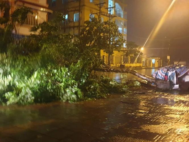 Hình ảnh bão số 3 đổ bộ, Móng Cái cây đổ ngổn ngang - ảnh 6