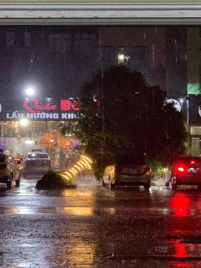 Hình ảnh bão số 3 đổ bộ, Móng Cái cây đổ ngổn ngang - ảnh 7