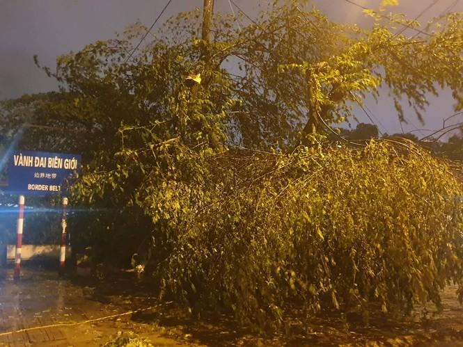 Hình ảnh bão số 3 đổ bộ, Móng Cái cây đổ ngổn ngang - ảnh 8